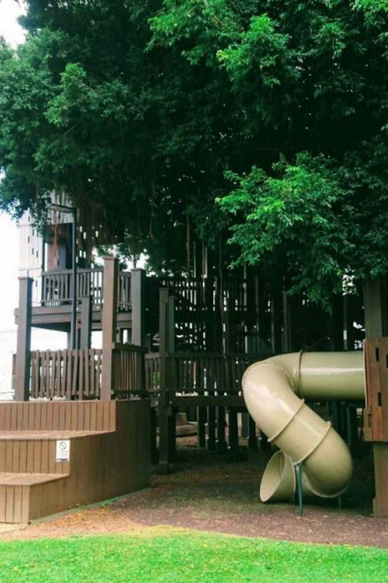 Fig tree playground in Cairns